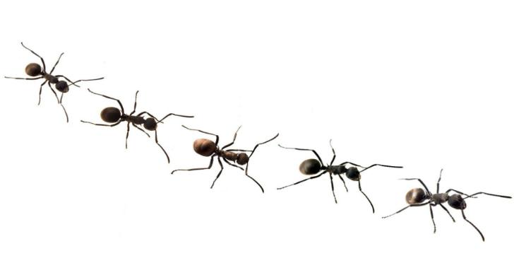 Ants728x396.jpg