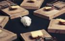 mousetrap135x85.jpg