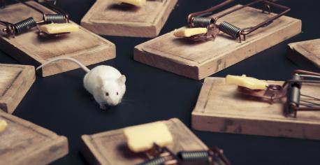 mousetrap458.jpg