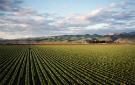 agriculture135x85.jpg