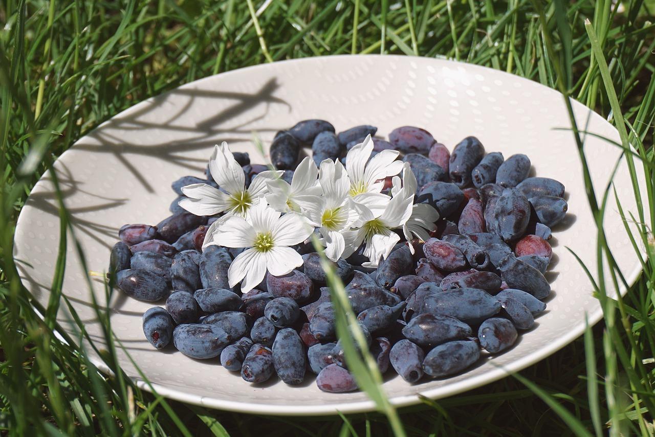 black-berries-6343133_1280.jpg