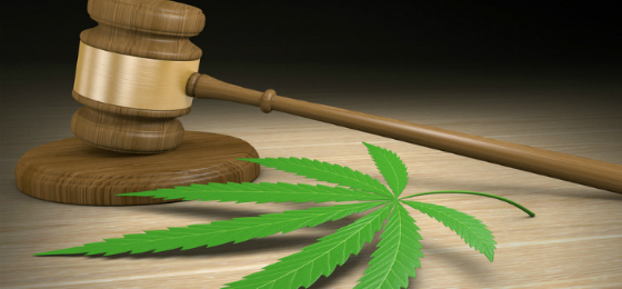 cannabiscontrolact560x260.jpg