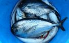 fishfraud135x85.jpg